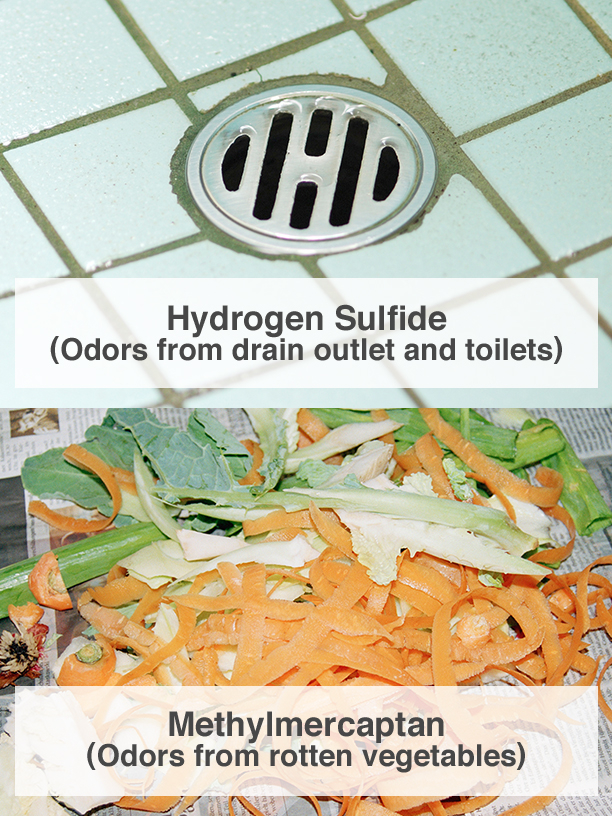 Hydrogen Sulfide (Odors from drain outlet and toilets), Methylmercaptan (Odors from rotten vegetables)