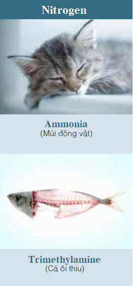 Ammonia (Pet odors, etc.), Trimethylamine (Smell of rotten fish, etc.)